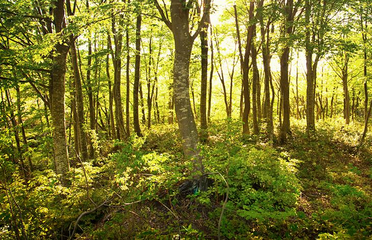 東北の木材使用